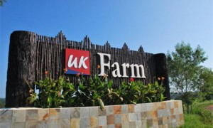 Taxi to UK Farm Kluang from Singapore